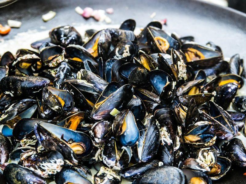 Häng med på musselsafari